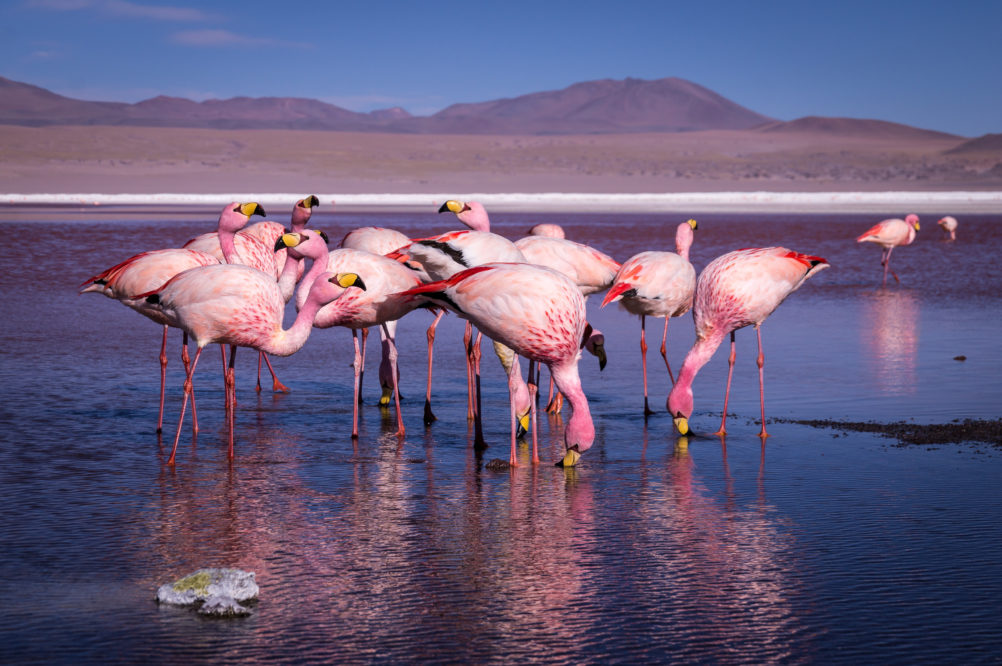 bolivia-travel-salt-flats-adventure-flamingos-ute-junker