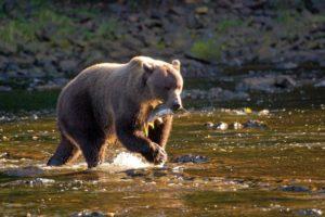 alaska-wildlife-cruising-ute-junker
