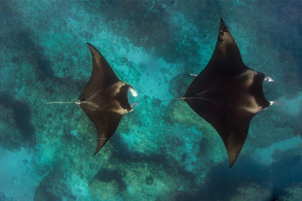 ningaloo-reef-western-australia-manta-rays-ute-junker